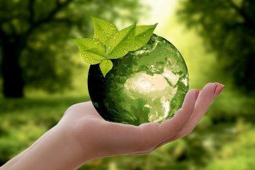 Cemebal Medio ambiente