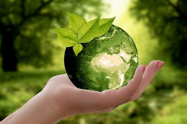 Cemebal | Consultora medioambiental en Mallorca